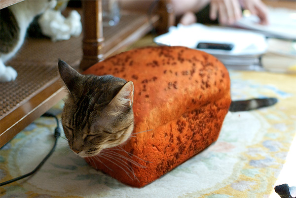 A bread baked cat